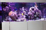 Meerwasser Aquarium 700l