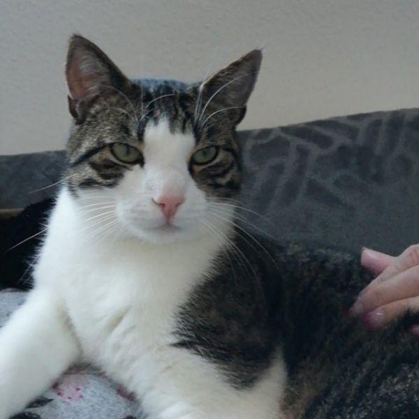 Katzenbetreuung zuhause in Burgthann