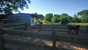 Offenstallplatz für Kleinpferd