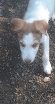 DAKOTA - kleines Hundemädchen sucht ihre