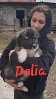 Delia sucht ein liebevolles Zuhause