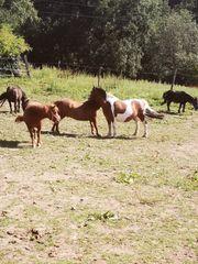 Unserer ponys suchen pflegebeteiligung