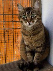 Katzenpärchen Cleopatra und Michl suchen