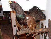 Jagdnachlaß Trophäen Geweihlampen Tier präpariert