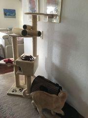 Katzen- Kratzbaum inkl Katzengeschirr und