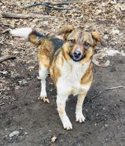 schöne Hundedame sucht Familie