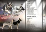 Osteuropäische Schäferhund WURFPLANUNG 2020 FCI -