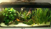 Tolles 112Liter Aquarium mit Abdeckung
