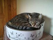 Ansbacher Katzenpension