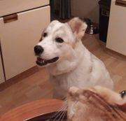 Laika will endlich ankommen