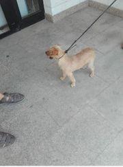 Oddy - süßer Terrier-Mix sucht ein