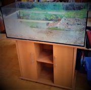 Wasserschildkröten Aquarium