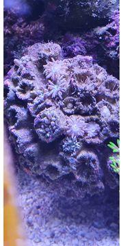 Hallo Freunde der Meerwasser Aquaristik