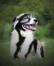 SARA - wäre glücklich als Einzelhund