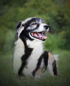 Hunde - SARA - wäre glücklich als Einzelhund