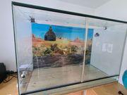 Terrarium mit vielseitiger Ausstattung