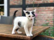 Babykatzen Kätzchen Katze