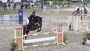 Vermögendes Springpferd Wallach gehobenes Freizeitpferd