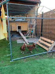 Hühnerstall auf Rollen
