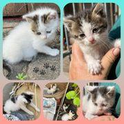 Wunderschöne Kitten Baby Katze suchen