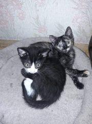 zwei süße Tierschutzkinder gerne zusammen