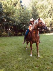 Pferd sucht Pflege- Reitbeteiligung
