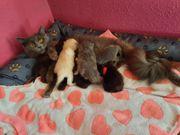 Babykätzchen suchen ein Zuhause