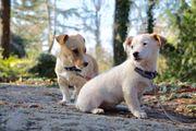 Tierschutzwelpen suchen ein Zuhause