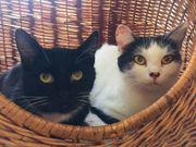 Katzen Pärchen Tinte und Freddi