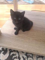 EKH Kitten nur noch ein