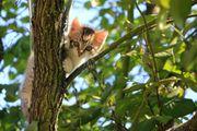 Bad Homburg Katzensitter gesucht Nebenjob