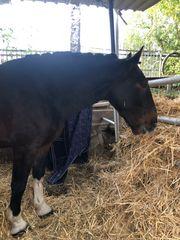 Ausnahme Pferd zu verkaufen