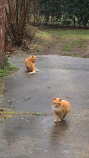 Kastrierte Katzen und Kater suchen