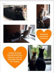 Katzen aus dem Tierschutz