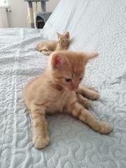 Katzenbaby sucht ein liebevolles Zuhause
