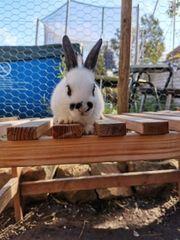 Noch 2 Kaninchen Baby s