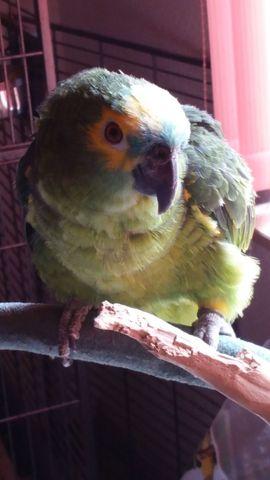 Vögel - ich suche Costa und Merle