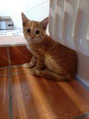 Kleiner Katzenjunge vom Bauernhof sucht