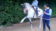 Tausche Pferd gegen Pony