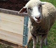 Schafwolle ungewaschen fürs Hochbeet oder