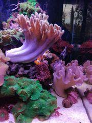 Korallen Fische