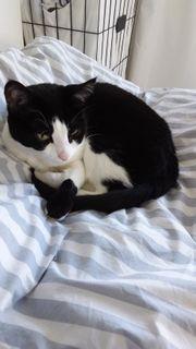 Wunderschöne 5 Jahre alte Katze