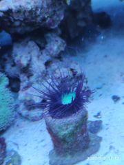 Meerwasseraquarium 200x60x70 komplett