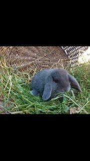 NHD Kaninchen 5 Monate alt