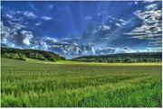 Suche Wiese Ackerland Waldstück zum