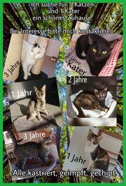 Tierschutz Katzen erwachsene Katzen Jungkatzen