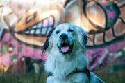 Hunde- und Pferdefotografie München und