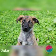 Duke - sucht das Abenteuer