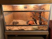 Terrarium mit kompletter Ausstattung