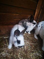 Süße Baby Hasen